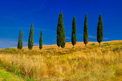 Tuscany Trees Landscape Stock Photo