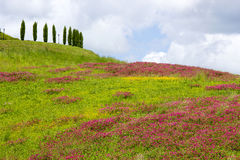 Tuscany - typical landscape Royalty Free Stock Images
