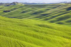Tuscany, undulating rural landscape, Italy. Tuscany, undulating terrain in Crete Senesi country landscape, Italy, Europe. Rolling Hills, green fields with Royalty Free Stock Images