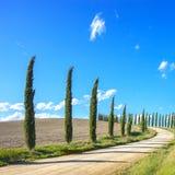 Tuscany väg för vit för Cypress Trees landskap, Italien fotografering för bildbyråer