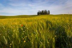 Tuscany vårlandskap Fotografering för Bildbyråer