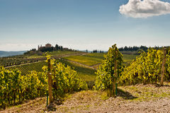 Tuscany. View of scenic Tuscany landscape with vineyard in the Chianti region, Tuscany, Italy Royalty Free Stock Images