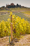 Tuscany. View of scenic Tuscany landscape with vineyard in the Chianti region, Tuscany, Italy Royalty Free Stock Image