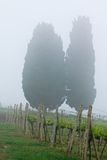 Tuscany Vineyard Stock Photo