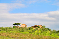 Tuscany vineyard Royalty Free Stock Photography