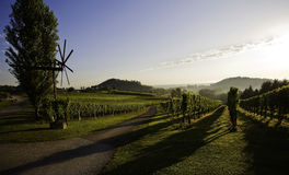 Tuscany vineyard Stock Photography