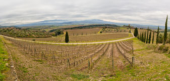 Tuscany vineyard. Tuscan vineyard in winter. Production of wine Brunello di Montalcino Stock Image