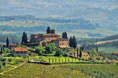 Tuscany vineyard. Tuscany in Italy, typical vineyard and cypress trees in Chianti region near Florence royalty free stock images