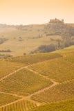 Tuscany vineyard Royalty Free Stock Images
