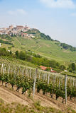 Tuscany vineyard Stock Image