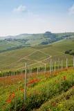 Tuscany vineyard Royalty Free Stock Photos