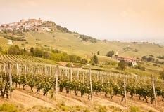 Tuscany vineyard Royalty Free Stock Photography