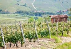 Tuscany vineyard Stock Photography