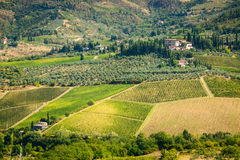 Tuscany. Vineyard Stock Images