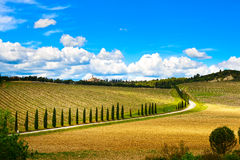 Tuscany, vineyard, cypress trees and road, rural landscape, Ital. Vineyard, cypress Trees rows and road in a rural landscape in val d Orcia land near Siena stock photo
