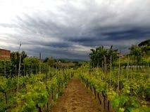 Tuscany vineyard before rain Royalty Free Stock Photos