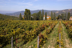 Tuscany vineyards Stock Photos