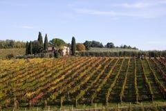 Tuscany vineyards Royalty Free Stock Photo