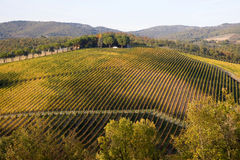 Tuscany vineyards Stock Photo