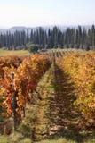 Tuscany vineyards Royalty Free Stock Image