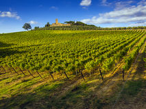 Tuscany vineyards countryside. Vineyards in the Chianti region of Tuscany, Italy Royalty Free Stock Images