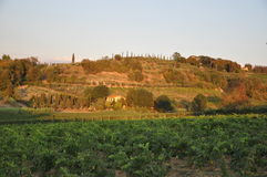 Tuscany vineyards  hilltop near Florence Stock Image