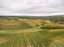 Tuscany vineyards. Near San Gimignano stock photos