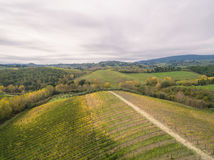 Tuscany vineyards Royalty Free Stock Photo