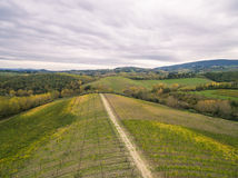 Tuscany vineyards. Near San Gimignano stock image