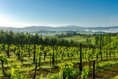 Tuscany vineyards. Nice view of the farm and its vineyards Stock Photo