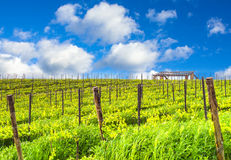 Tuscany vineyards. A Tuscan landscape with the vineyards that produce one of the most prestigious wines in the world Stock Image