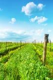 Tuscany vineyards Royalty Free Stock Photos