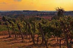tuscany vingård Arkivbild
