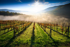 Tuscany vingård Royaltyfria Bilder