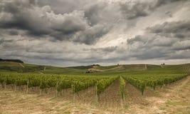 tuscany vingårdar Arkivbilder