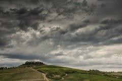 tuscany vingårdar Fotografering för Bildbyråer