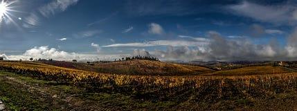 Tuscany vingårdpanorama Arkivfoton