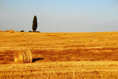 Tuscany Vista Royalty Free Stock Photography