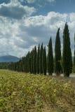 Tuscany, Włochy, krajobraz z cyprysami zdjęcie royalty free