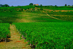 Tuscany  Wine Farm House Royalty Free Stock Photography