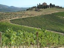 tuscany winegårdar Royaltyfri Fotografi
