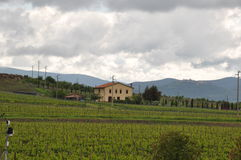 Tuscany winelands Royalty Free Stock Images