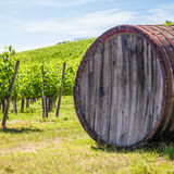 Tuscany wineyard Royalty Free Stock Image