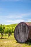 Tuscany wineyard Stock Images