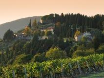tuscany wineyard Royaltyfria Foton