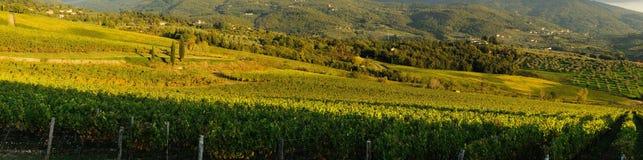 tuscany wineyard Fotografering för Bildbyråer