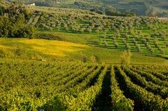 tuscany wineyard Arkivfoton