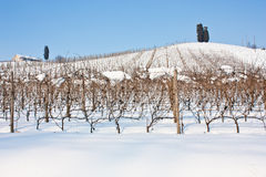Tuscany: wineyard i vinter Fotografering för Bildbyråer