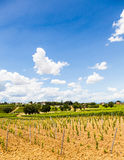 Tuscany Wineyard Stock Images