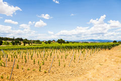 Tuscany Wineyard Stock Photos